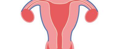 Cuello uterino